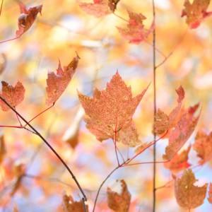 stockvault-autumn-colors138184